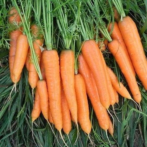 Carrot Flyaway F1 (Unwins)