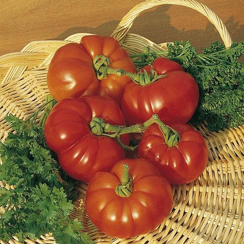 Tomato (Beefsteak) Marmande (Unwins)