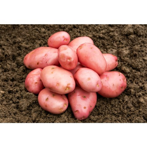 Desiree Seed Potatoes 2kg - Maincrop