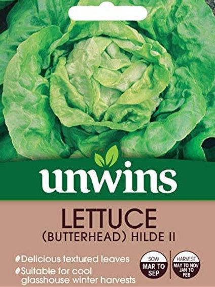 Lettuce (Butterhead) Hilde 2 (Unwins)