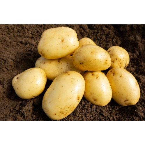 Wilja Seed Potatoes 2kg - Second Early