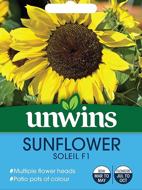 Unwins Sunflower Soleil F1 - Approx 12 Seeds