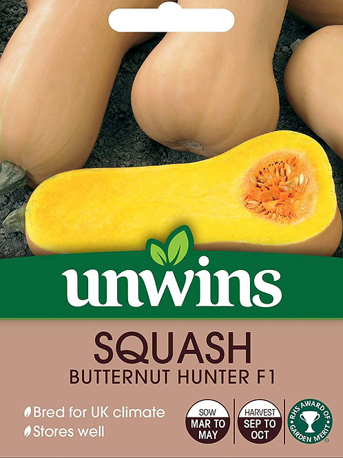 Squash Butternut Hunter F1 (Unwins)