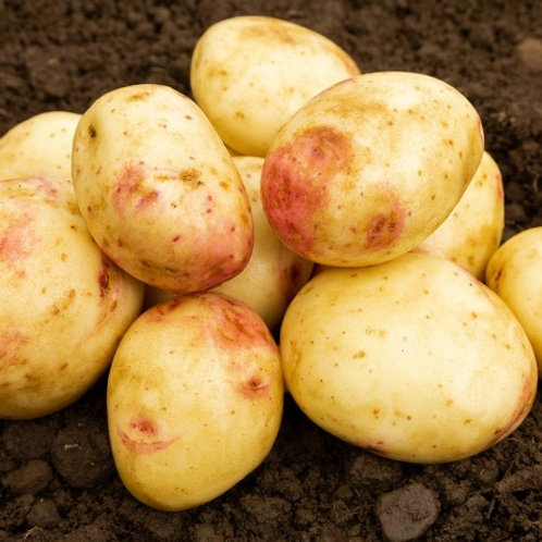 Cara Seed Potatoes 2kg - Maincrop