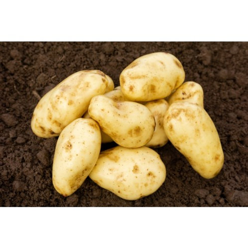 Sharpes Express Seed Potatoes - First Early