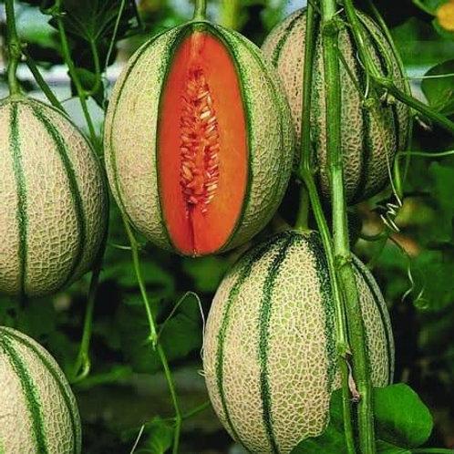Unwins Melon Pepito F1 - Approx 10 Seeds