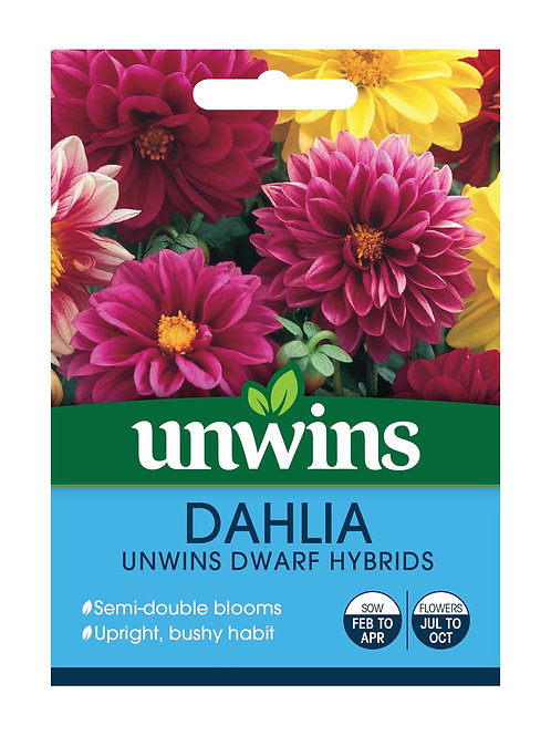 Unwins Dahlia Unwins Dwarf Hybrids - Approx 75 Seeds