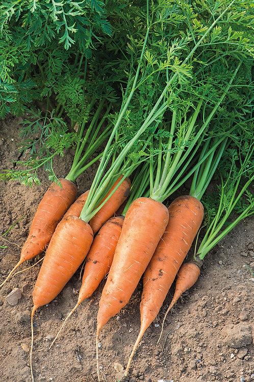 Carrot Chantenay Red Cored 2 (Unwins)