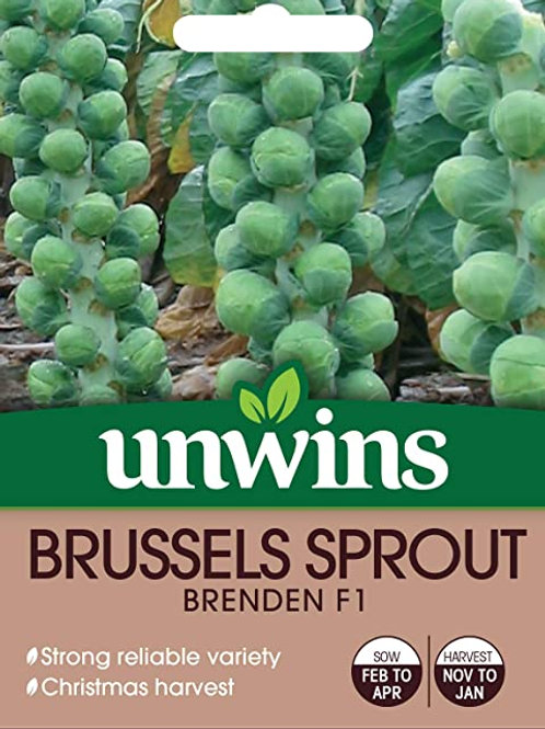 Unwins Brussels Sprout Brenden F1 - Approx 50 Seeds