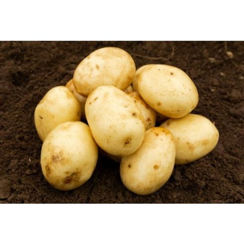 Nadine Seed Potatoes 2kg - Second Early