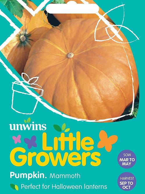 Unwins Little Growers Pumpkin Mammoth - Approx 18 Seeds
