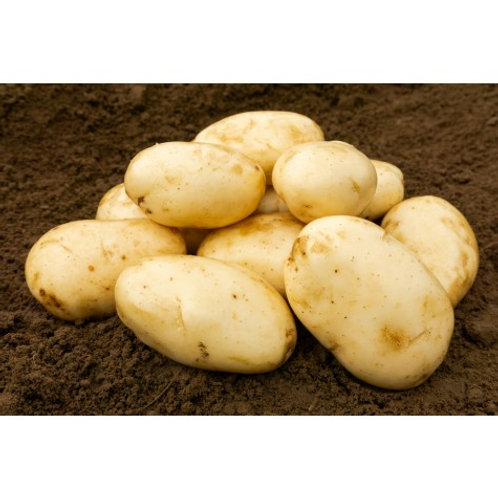 International Kidney Seed Potatoes 2kg - First Early