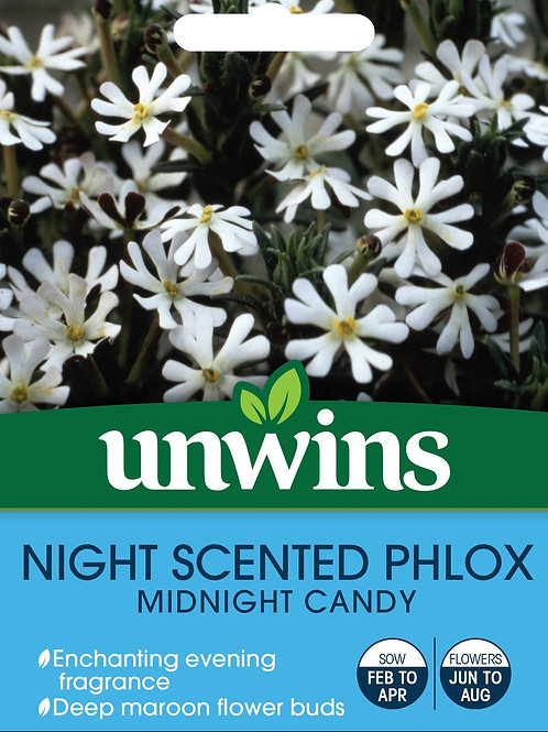 Unwins Night Scented Phlox Midnight Candy - Approx 225 Seeds