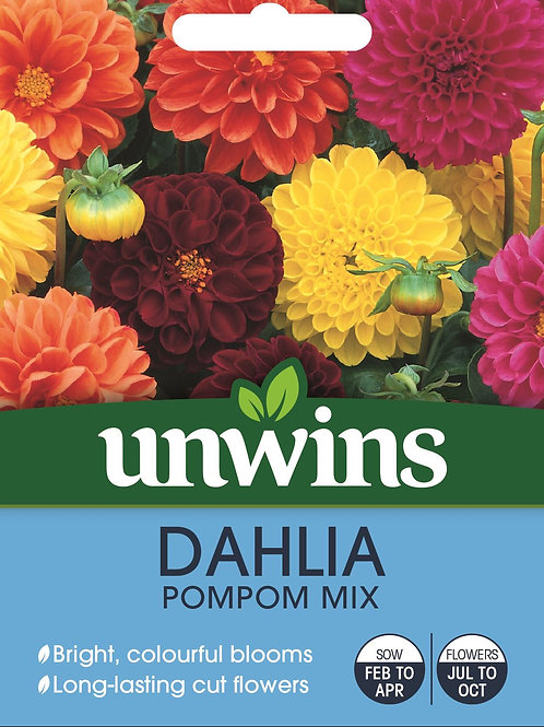 Unwins Dahlia Pompom Mix - Approx 50 Seeds