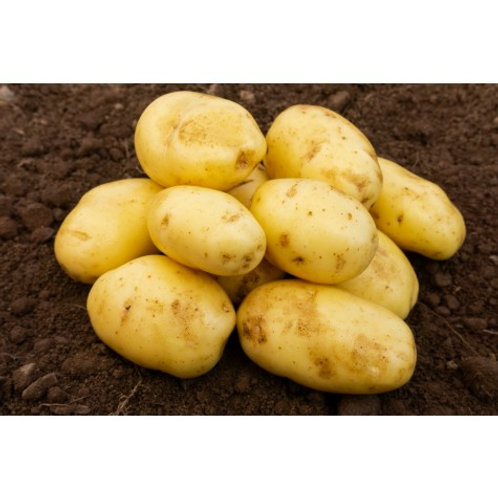 Nicola Seed Potatoes 2kg - Second Early