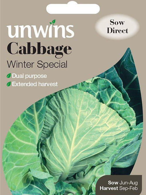 Unwins Cabbage Winter Special - Approx 50 Seeds