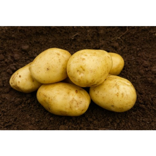 Estima Seed Potatoes 2kg - Second Early