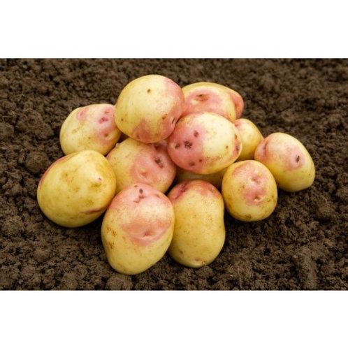 King Edward Seed Potatoes 2kg - Maincrop
