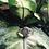 Thumbnail: Rondo