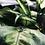 Thumbnail: Mikró maansteen
