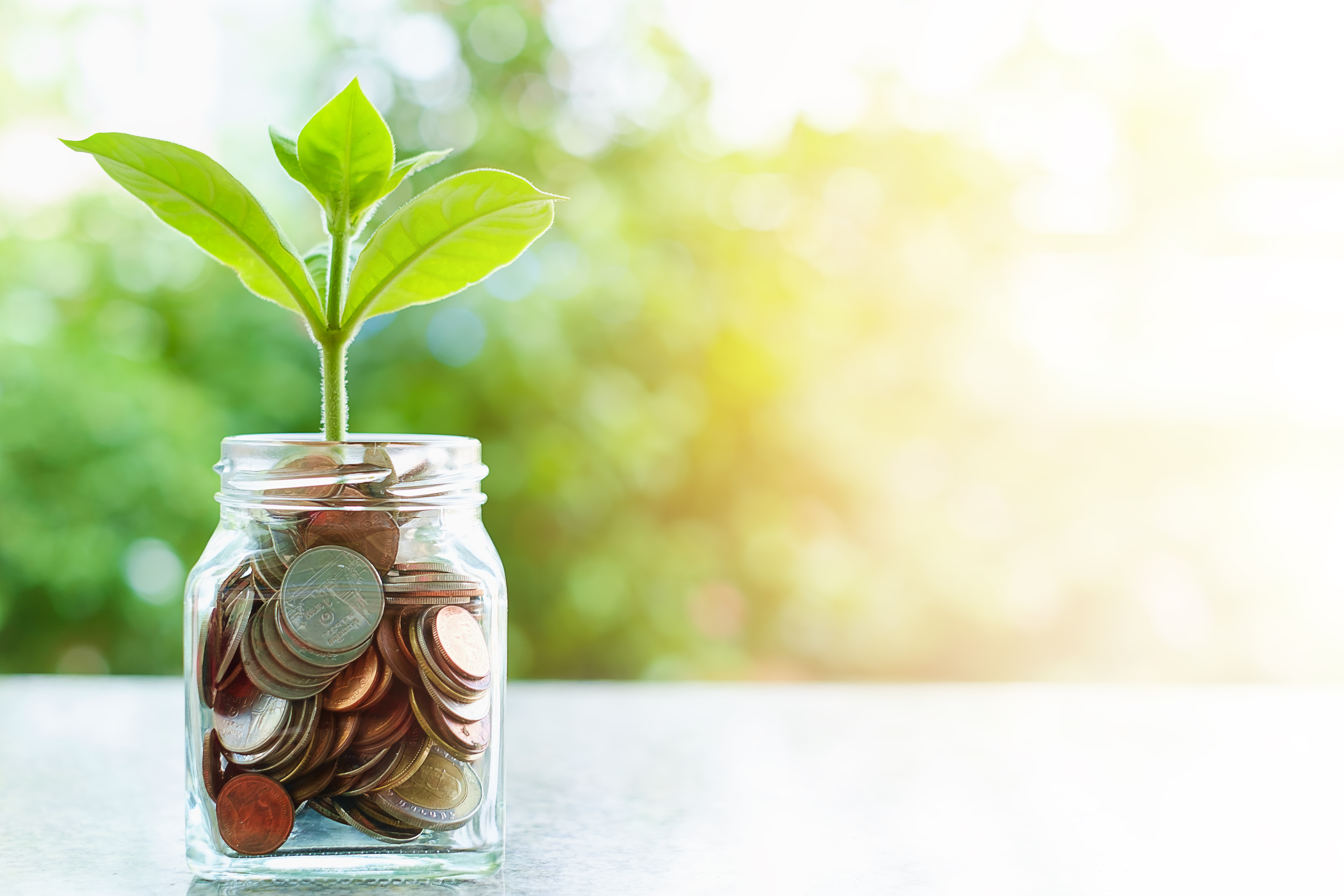 Plant growing from coins in the glass jar on blurred green natural background with sun light effect
