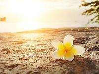ckupload_20190927095657_plumeria-flower-