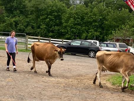 Herder/Cheesemaking Intern - Kylie