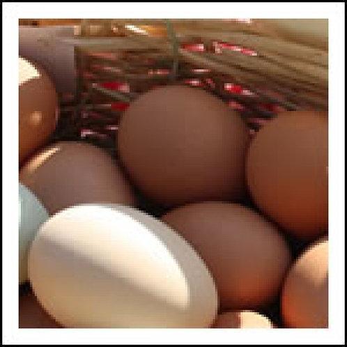 Eggs/ Chicken-Pastured Brown Eggs (Dozen)