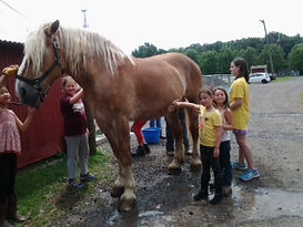"Summer Camp Draft Horse ""car wash"""