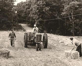 Tedding Hay- Hassick family
