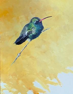 Broadbilled Hummingbird