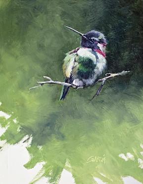 Costa's Humminbird