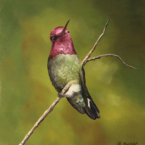 Anna's Hummingbird by Barbara Rudolph