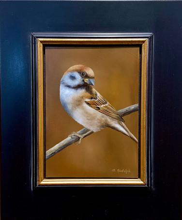 Eurasian Sparrow