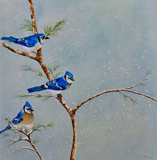 Winter Jays