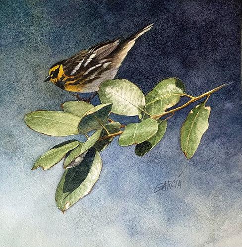 Townsend's Warbler by Joe Garcia