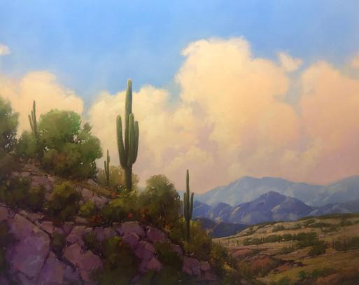 Saguaro Vista