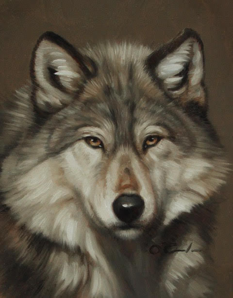 Timber Wolf Portrait by Jennifer O'Cualain