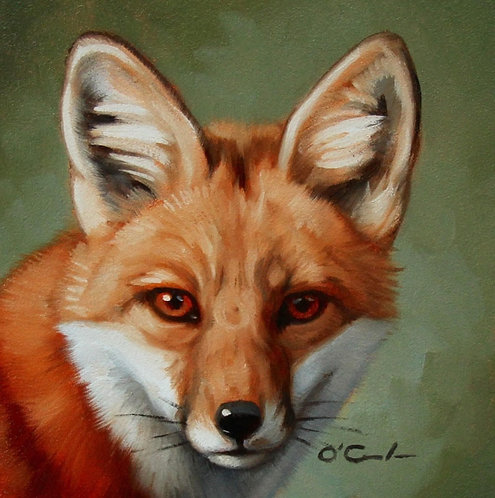 Red Fox Portrait by Jennifer O'Cualain