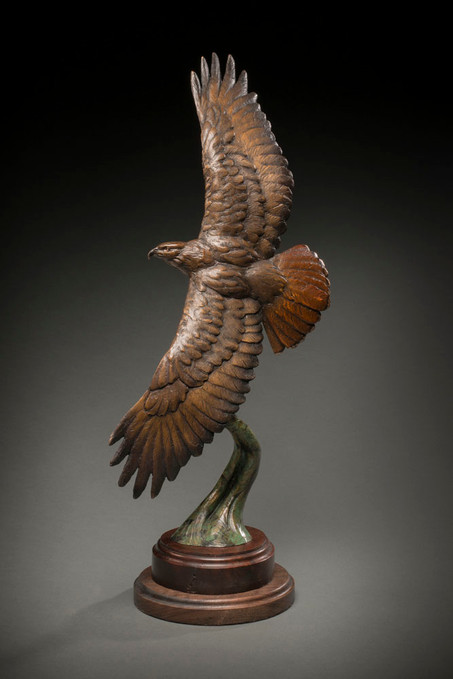 Higher Vision (red tailed hawk)