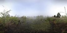 Foggy Morning Wetlands