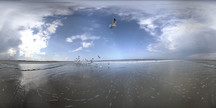 Seaguls Flight