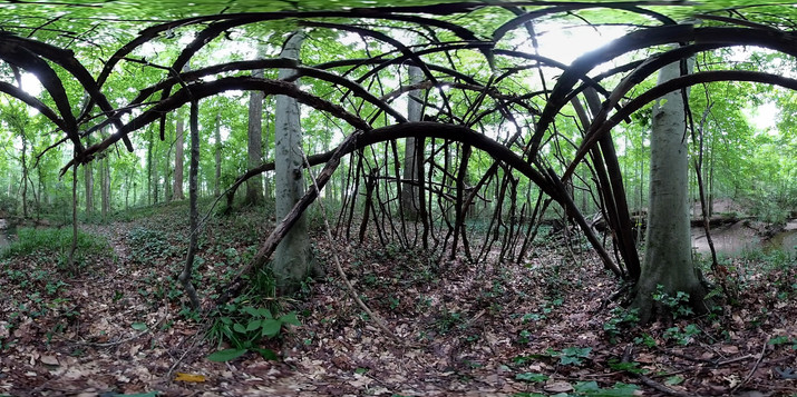 Forest Fort