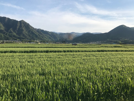 塩田平の田園風景