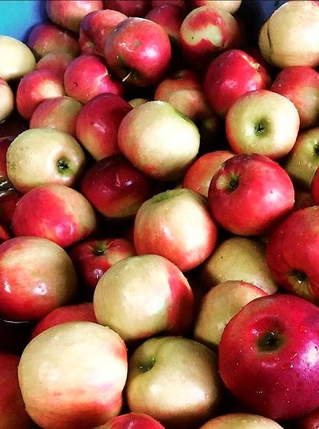 葡萄ジュース、リンゴジュースの加工をほぼ毎日しています🍎_1つ1つ丁寧に搾るた