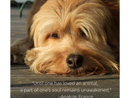 Quotes For Pet Lovers!