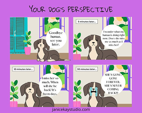 your dog's perspective.jpg