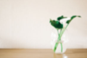 Canva - Green Plant on Clear Glass Vase.