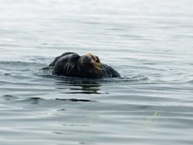 Exploring Monterey Bay and its Marine Life