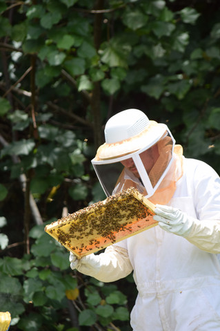 When is the best time to harvest honey?
